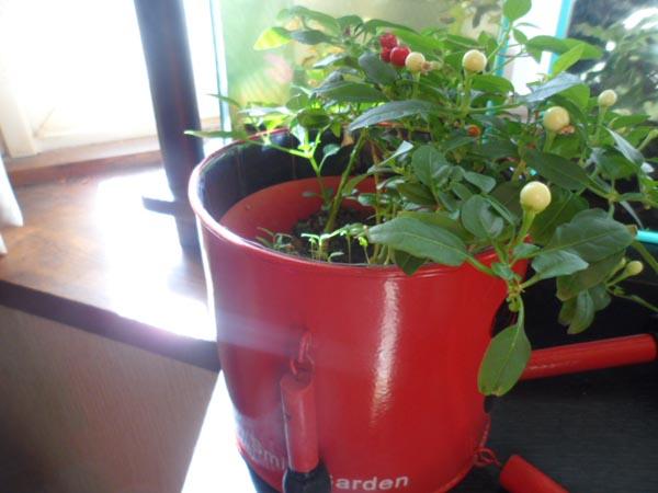 Gardening058